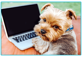 5 DOG TRENDS TO LOOK OUT FOR IN 2019 - Welcome to The
