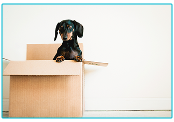 Moving Services from House Dictionary Design