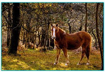 Beautiful horse rides: The New Forest.