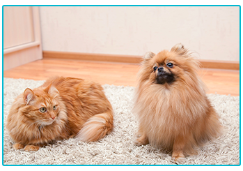renting a home with a pet - cat and dog on rug