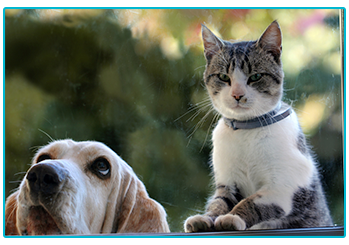 renting a home with a pet - cat and dog