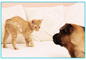 renting a home with a pet - cat and dog on sofa
