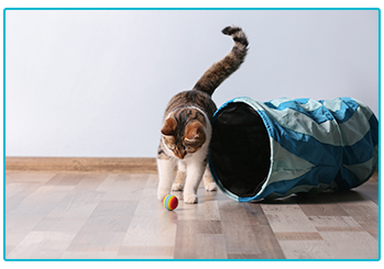 Obesity in pets - healthy cat playing with ball