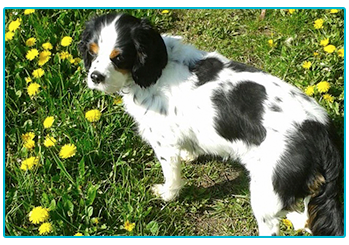 Lucie outside among the dandelions.