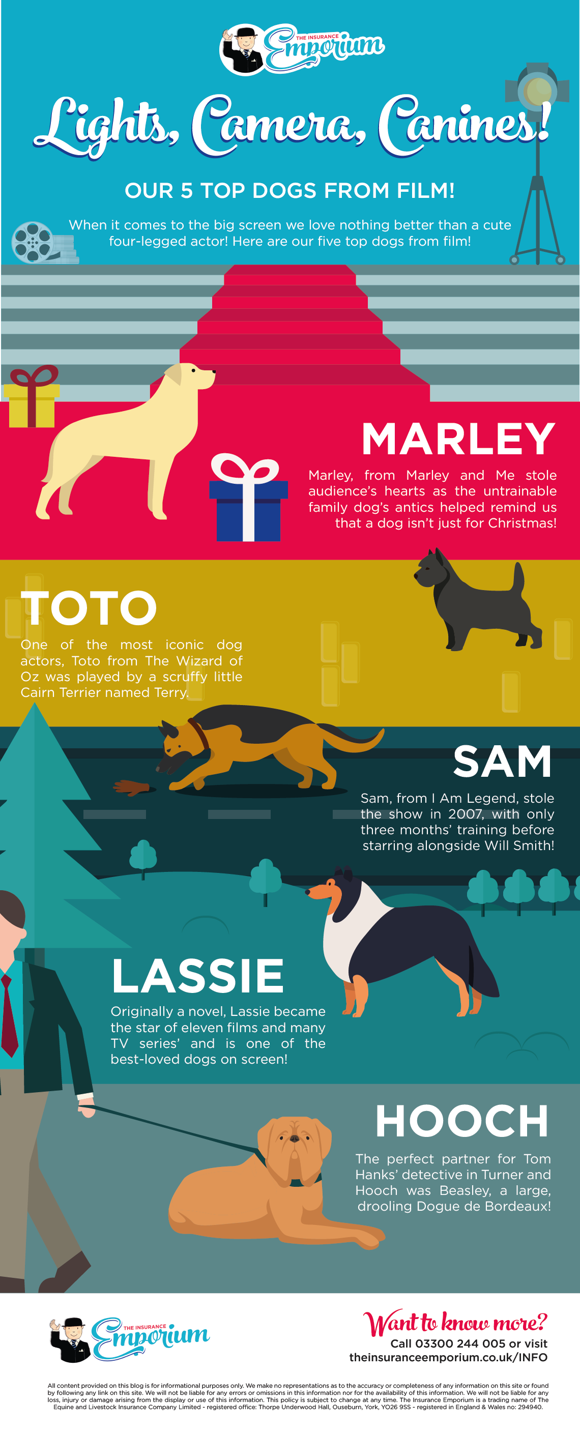 Lights, Camera, Canines! Our 5 Top Dogs from Film!  Infographic of famous dogs from film.