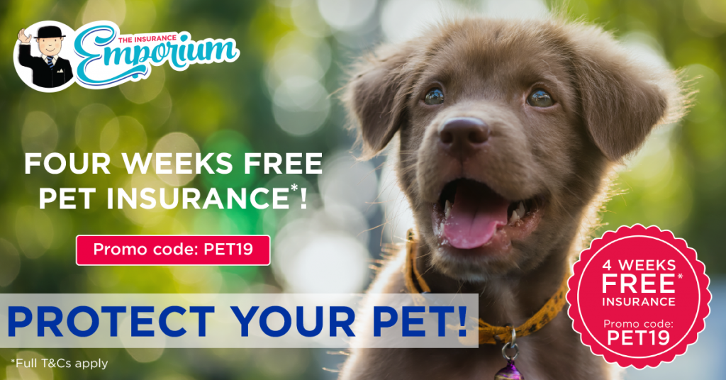 Get 4 weeks free pet insurance and protect your pet