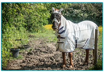 Caring for your horse during a heatwave