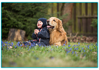 How to keep your child and dog safe together