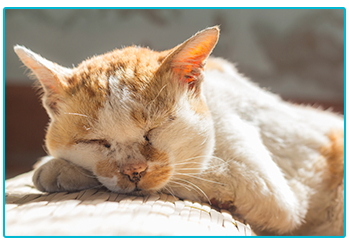 How to care for your geriatric cat - sleeping cat