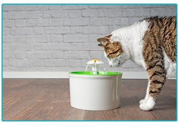 How to care for your geriatric cat - cat water fountain