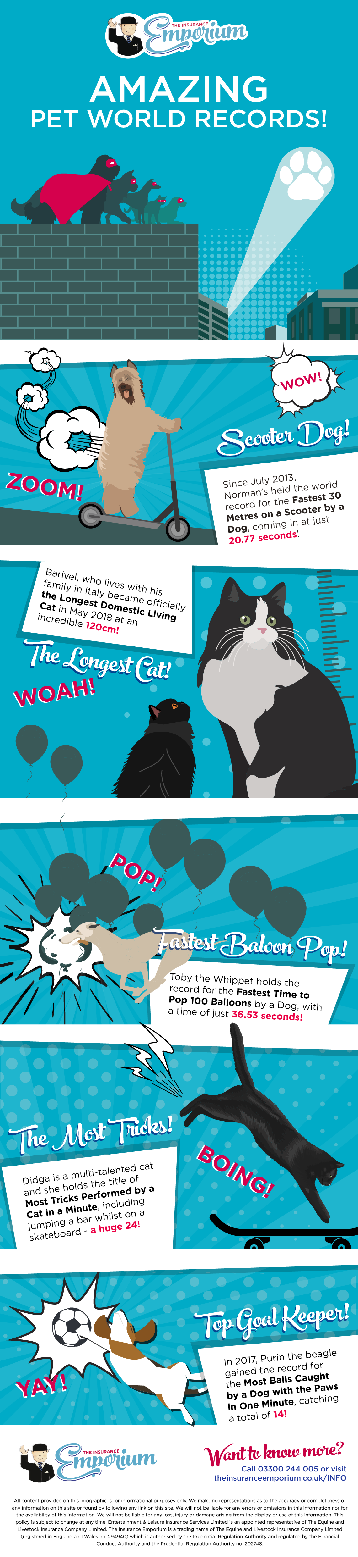 Pet world records infographic