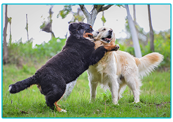 What type of dog owner are you? Dogs playing.