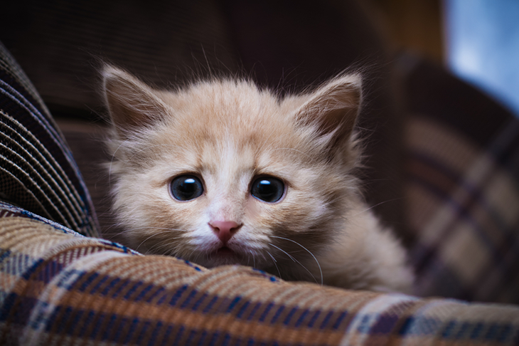How to keep your cat safe on bonfire night - tiny scared kitten