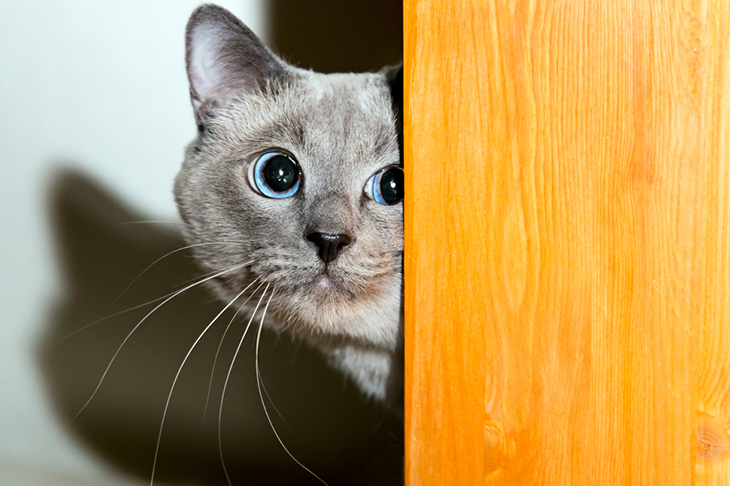 How to keep your cat safe on bonfire night - fearful cat looks round door