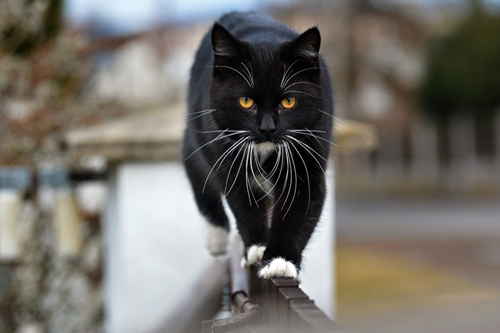 Reasons to adopt a black cat - black cat on the prowl