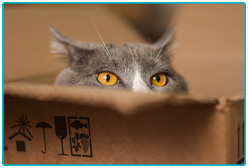 Living with a cat in an apartment - cat peeks out of the top of a box