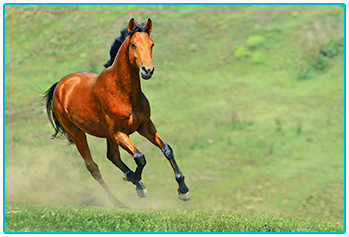 How to choose the right horse - brown horse gallops in a field