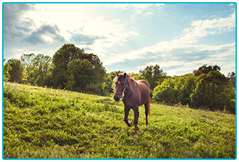 How to choose the right horse - brown horse in a sunny field