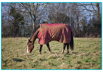 Is your horse ready for winter? Brown horse wears rug.