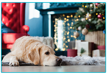 Why a pet isn't just for Christmas