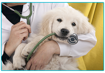 Things you pet insurance might not cover - puppy at the vets
