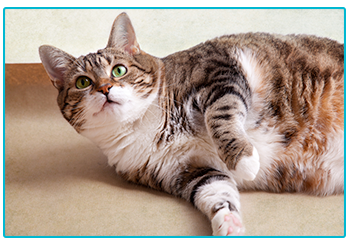 Things you pet insurance might not cover - cute cat
