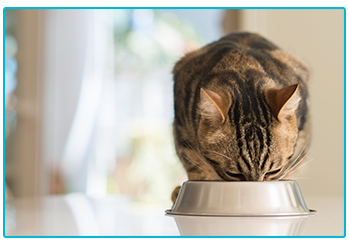How to give your pet medication - cat eating