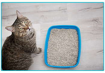Urinary obstruction in cats and dogs. Cat next to litter tray.