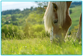 equine passports - horse eating grass in pasture