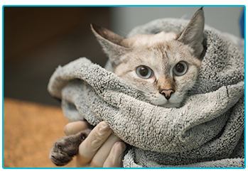 Keep your Cat Safe from Antifreeze Poisoning - cat wrapped up in towel