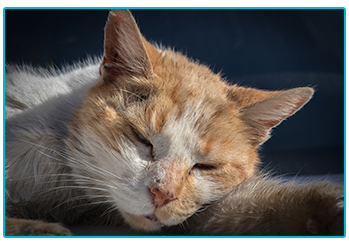 Keep your Cat Safe from Antifreeze Poisoning - sleeping cat