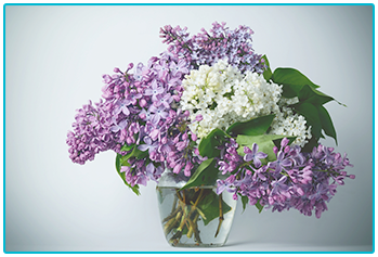 choosing seasonal wedding flowers - scented lilac in spring