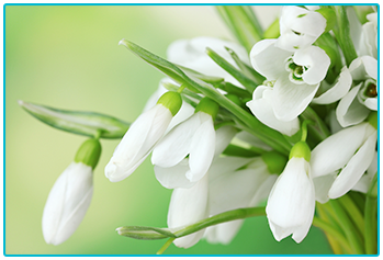 Choosing seasonal wedding flowers - winter snowdrops