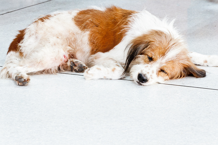 Common illnesses in dogs - dog sleeping on floor