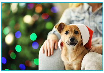 Great Christmas gifts for dogs - mixed breed dog in Santa hat