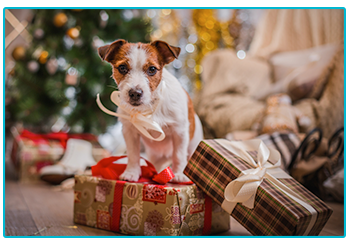 Great Christmas gifts for dogs - Jack Russell sitting on top of present