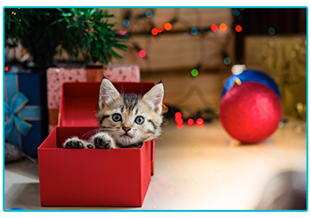 Christmas gift ideas for cats - kitten in box.