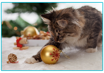 Christmas gift ideas for cats - cat playing with baubles.