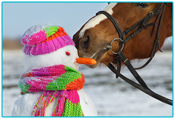 Horse is checking out a colourful snowman.