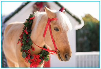 Sandy coloured horse wearing Christmas wreath