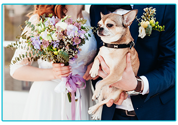 Wedding trends - bride and groom bring dog to their wedding