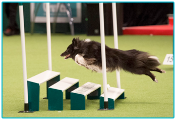 HAYLEY AND TEAL GET READY FOR CRUFTS 2018! - Welcome to ...