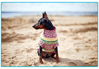Is it okay to dress up my pet - dog wearing patterned jumper