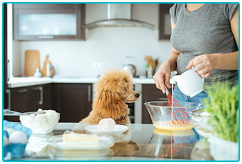 Is it safe for pets to eat pancakes? - poodle watches woman make pancakes
