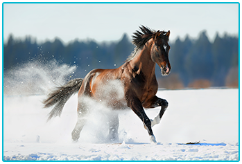Exercising your horse in winter - horse running in the snow