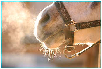 Exercising your horse in winter - horse's breath visible