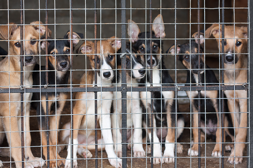 Lucy's Law puppies behind cage