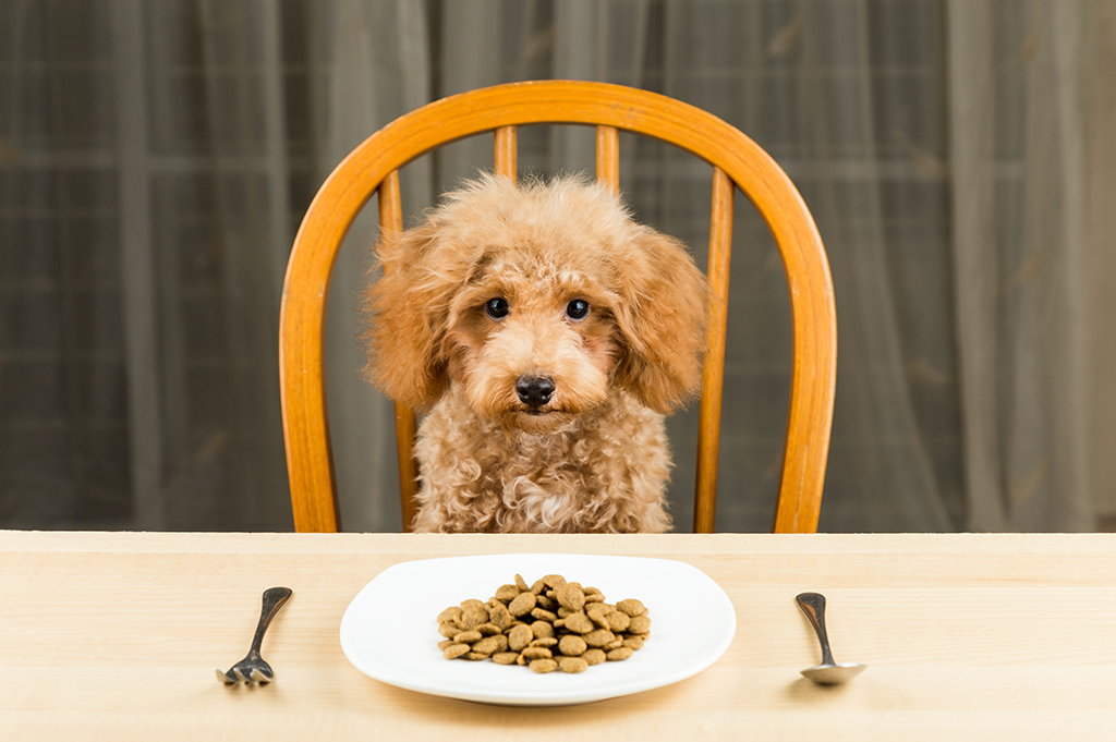 Alternative Pet Food - dog sits at table for meal