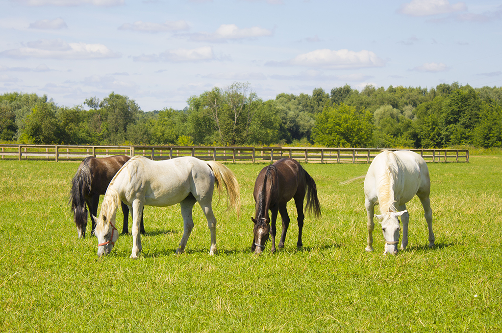 Horses grazing in livery yard