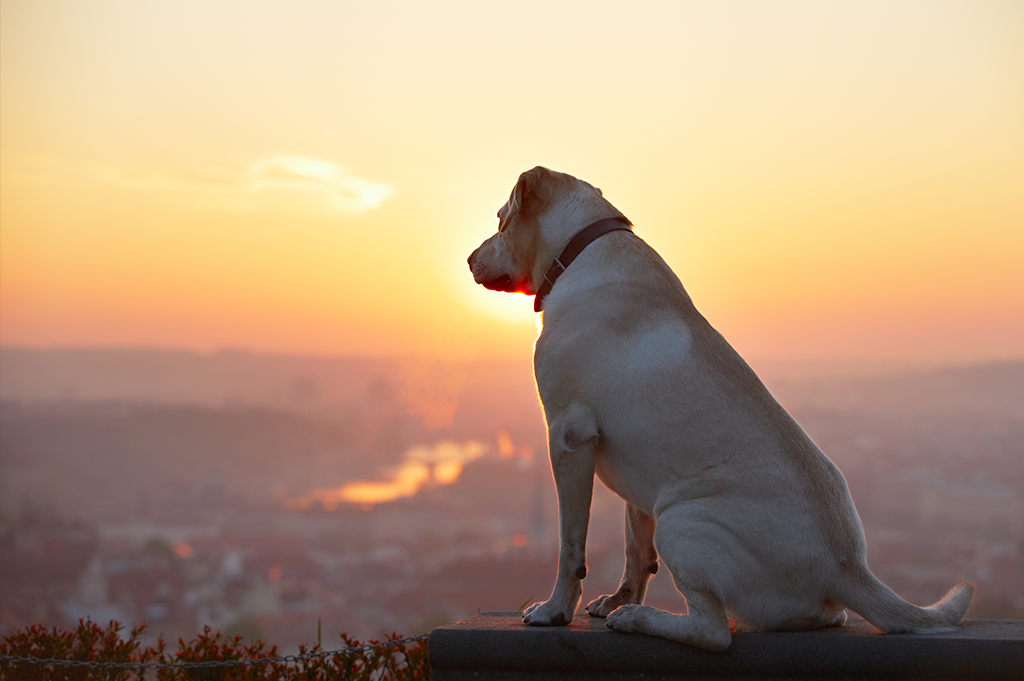 Dementia - Dog looking majestically at the view